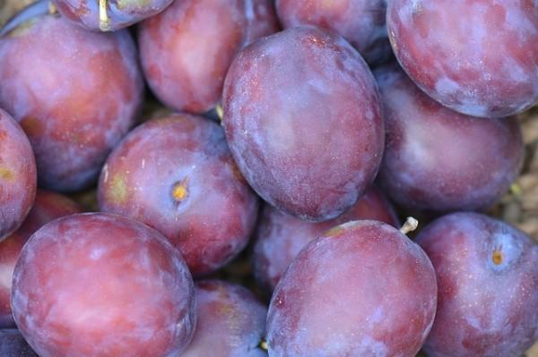 Prune rouge royal