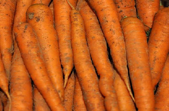 carotte terre