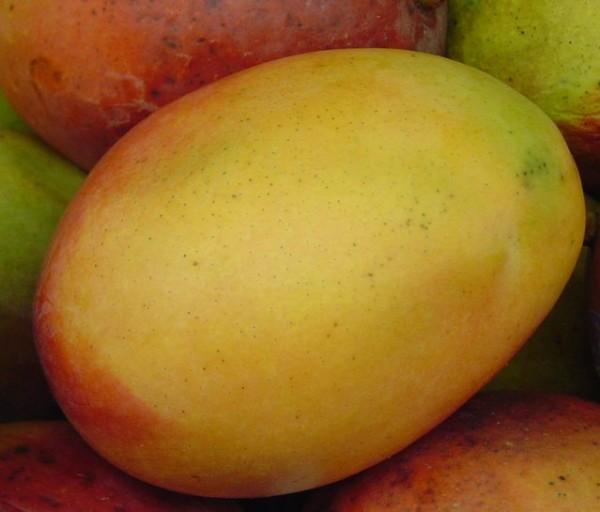 Mangue keith