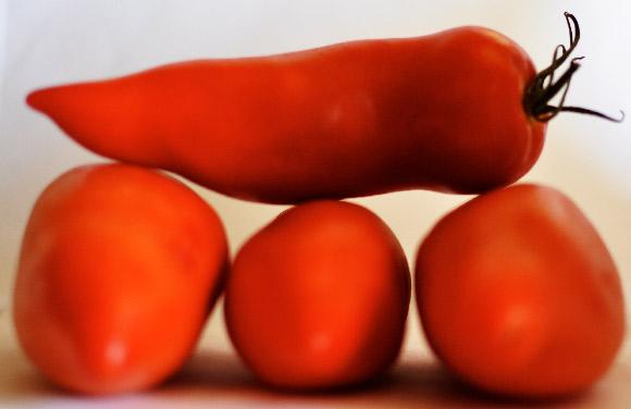 Tomate andine cornue (France)