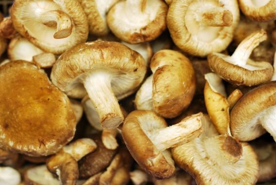 champignon shiitaké