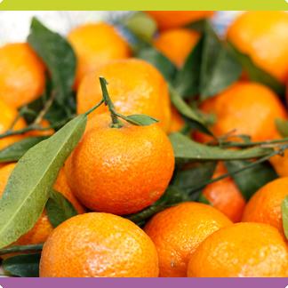 Clementine corse (sans pépin)