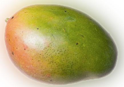 Mangue palmer