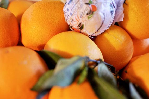 Orange valencia feuille (Italie)