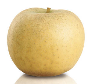 pomme chantecler