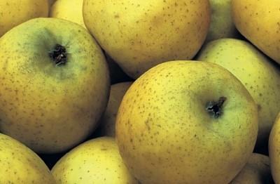 Pomme jaune belchard chantecler (115g)