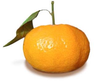 Mandarine Tardivo (Italie)
