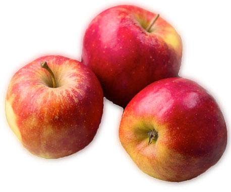 La Pomme Elstar est aussi l'une des vraies stars de la croque