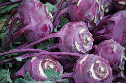 Chou rave violet