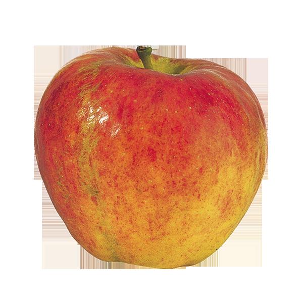 Pomme pinova (env. 170g)